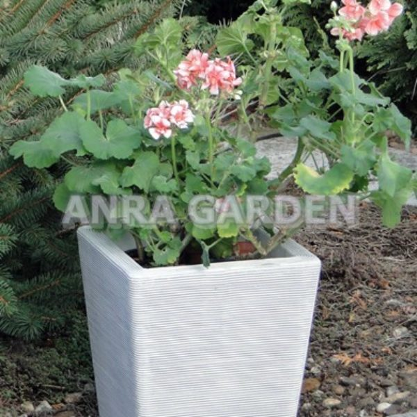 DONICA S204057 ANRA GARDEN 1