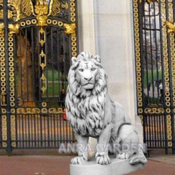 lew duży 620 kg I-crop
